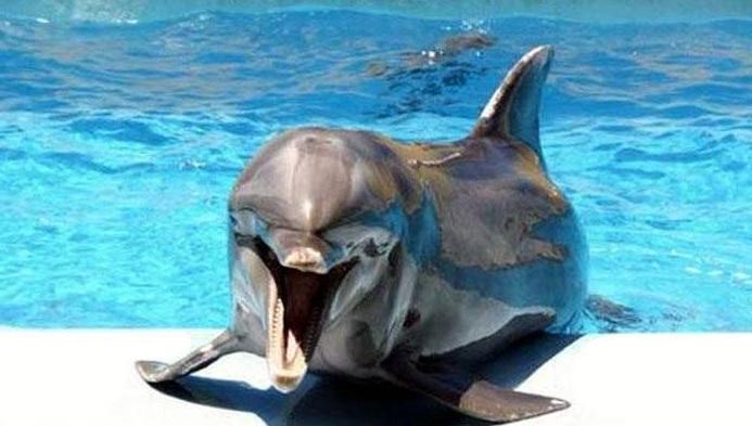 В Могилеве набирает обороты флешмоб против дельфинария