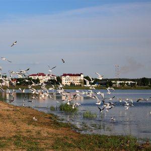 ОГП решила напомнить властям, что Святое озеро — грязное