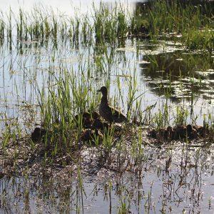 Улады адказалі пра Святое возера: яно чысціцца, усталяваныя лаўкі, кантэйнеры, скрыні