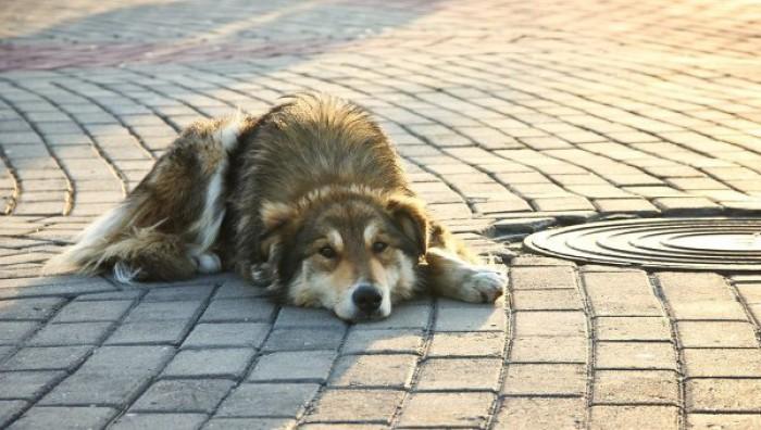 Кажется, в Могилеве действительно начали активнее отлавливать бездомных животных