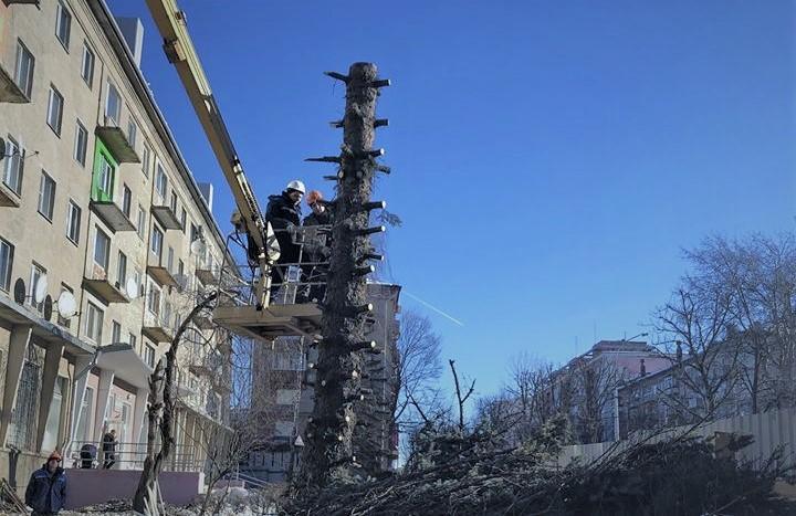 Магілёўскі блогер Дзяніс Васількоў заклікаў улады спыніць краніраванне дрэў